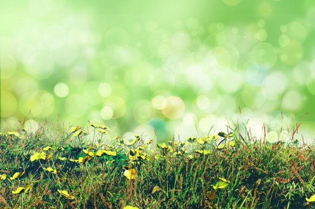 3D render of buttercups and grass on a bokeh lights background